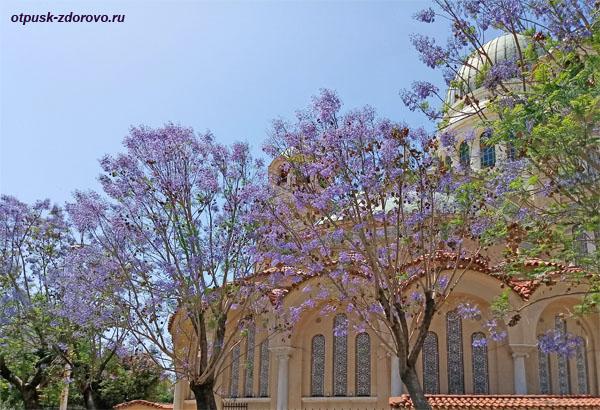 Цветущие деревья с фиолетовыми цветами вокруг собора апостола Андрея в городе Патры