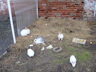 Николо-Пешношский монастырь в Луговом, кролики